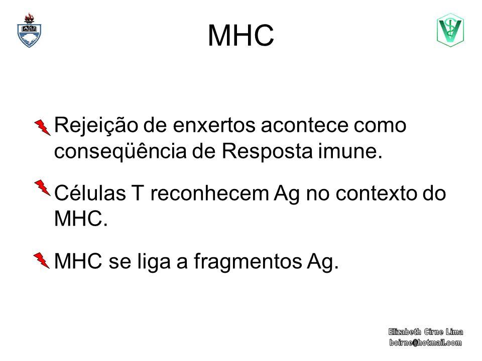 Rejeição de enxertos acontece como conseqüência de Resposta imune. Células T reconhecem Ag no contexto do MHC. MHC se liga a fragmentos Ag.