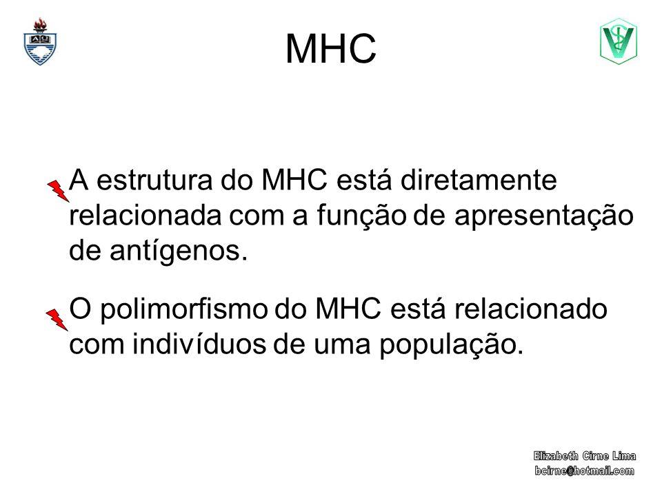 MHC A estrutura do MHC está diretamente relacionada com a função de apresentação de antígenos. O polimorfismo do MHC está relacionado com indivíduos d