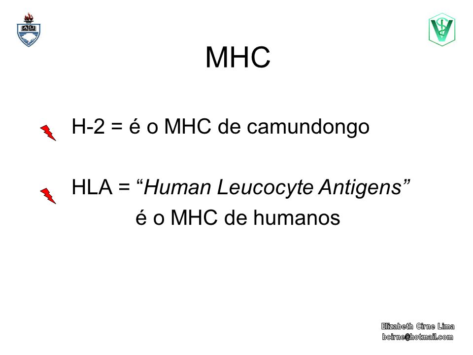MHC Moléculas altamente polimórficas Marcadores Individuais