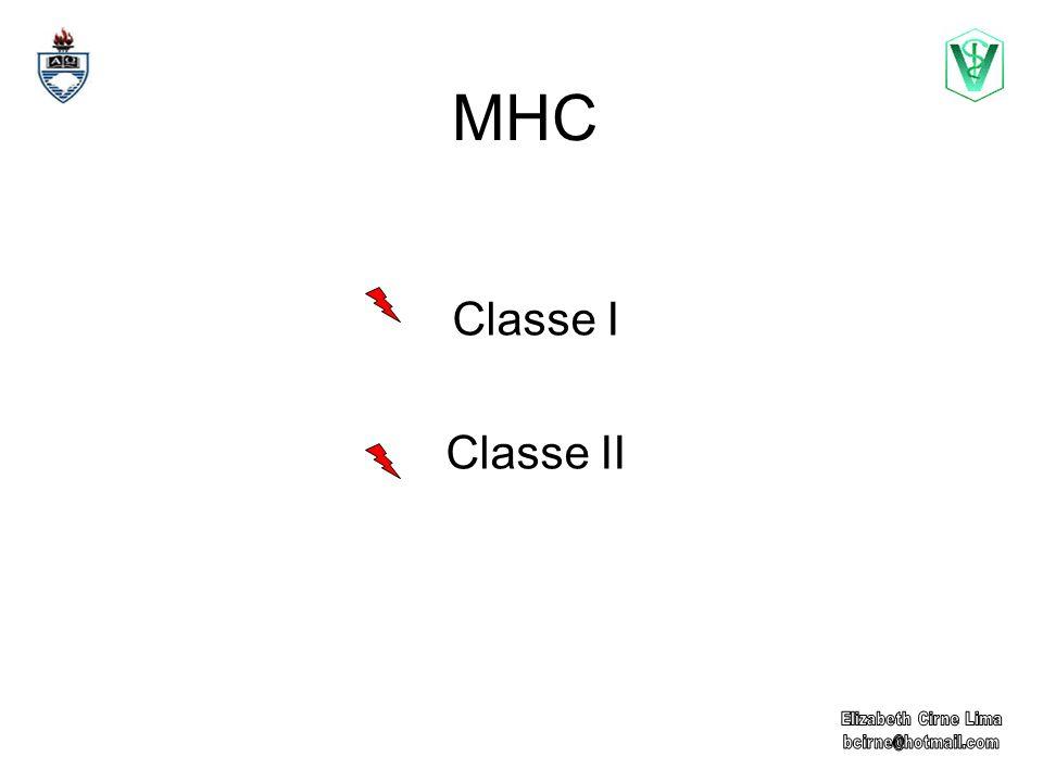 MHC Classe I Moléculas expressas em praticamente todas as células nucleadas.