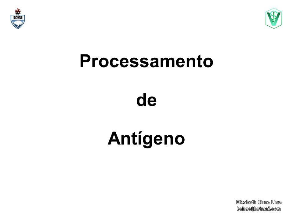 Processamento de Antígeno