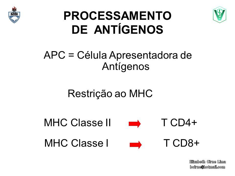 PROCESSAMENTO DE ANTÍGENOS APC = Célula Apresentadora de Antígenos Restrição ao MHC MHC Classe II T CD4+ MHC Classe I T CD8+