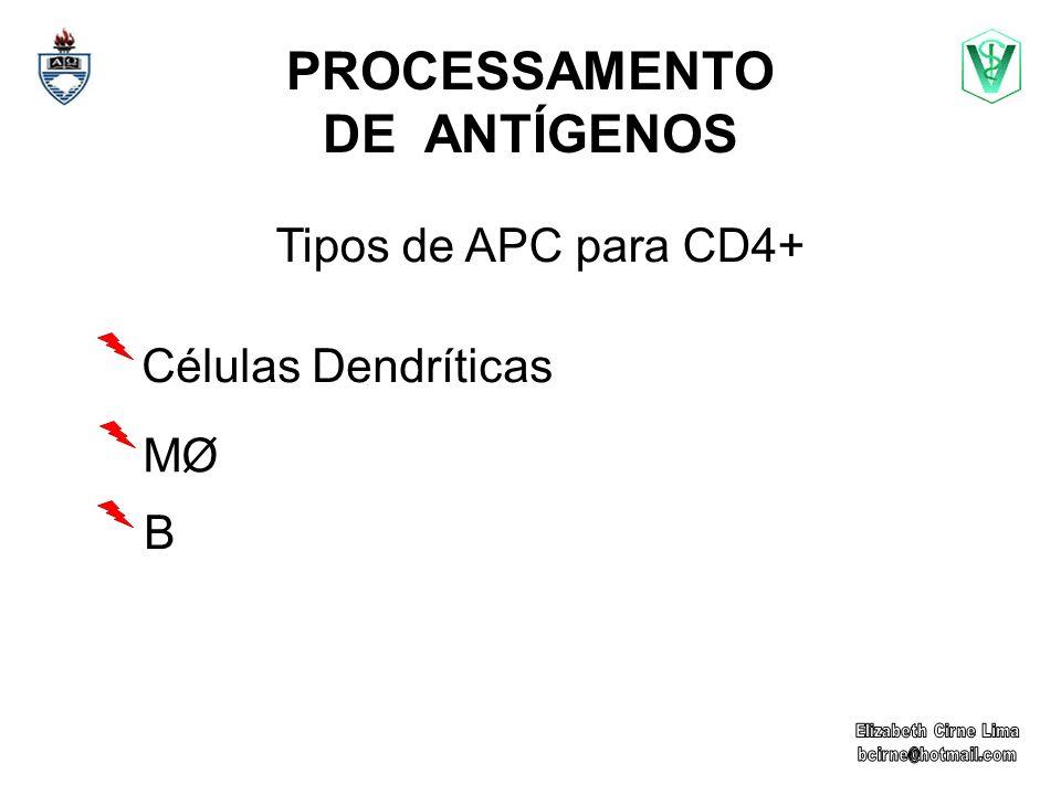 PROCESSAMENTO DE ANTÍGENOS Tipos de APC para CD4+ Células Dendríticas MØMØ B