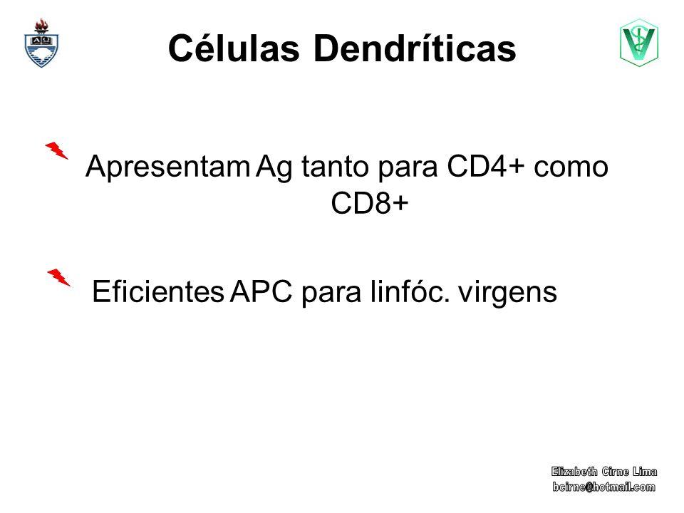Apresentam Ag tanto para CD4+ como CD8+ Eficientes APC para linfóc. virgens