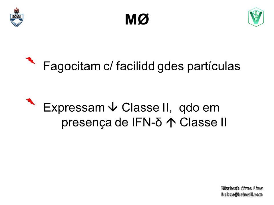 MØMØ Fagocitam c/ facilidd gdes partículas Expressam Classe II, qdo em presença de IFN-δ Classe II