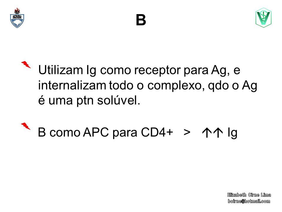 B Utilizam Ig como receptor para Ag, e internalizam todo o complexo, qdo o Ag é uma ptn solúvel.