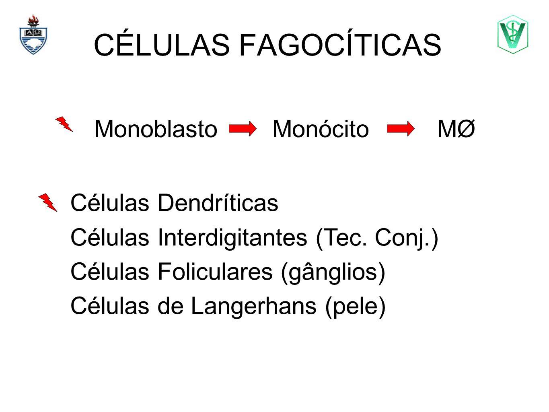 CÉLULAS FAGOCÍTICAS Elizabeth Cirne Lima bcirne@hotmail.com Células Dendríticas Células Interdigitantes (Tec. Conj.) Células Foliculares (gânglios) Cé