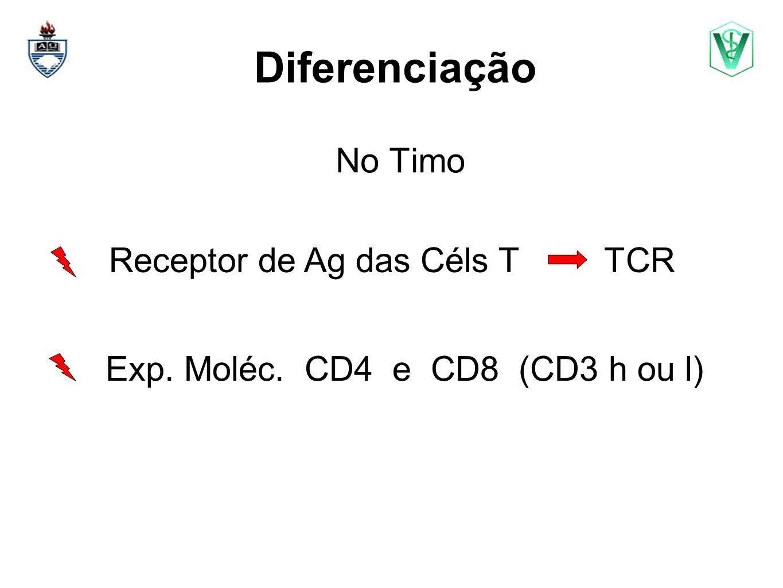 Diferenciação No Timo Elizabeth Cirne Lima bcirne@hotmail.com Exp. Moléc. CD4 e CD8 (CD3 h ou l) Receptor de Ag das Céls T TCR