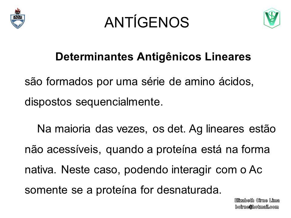 ANTÍGENOS Determinantes Antigênicos Lineares são formados por uma série de amino ácidos, dispostos sequencialmente. Na maioria das vezes, os det. Ag l