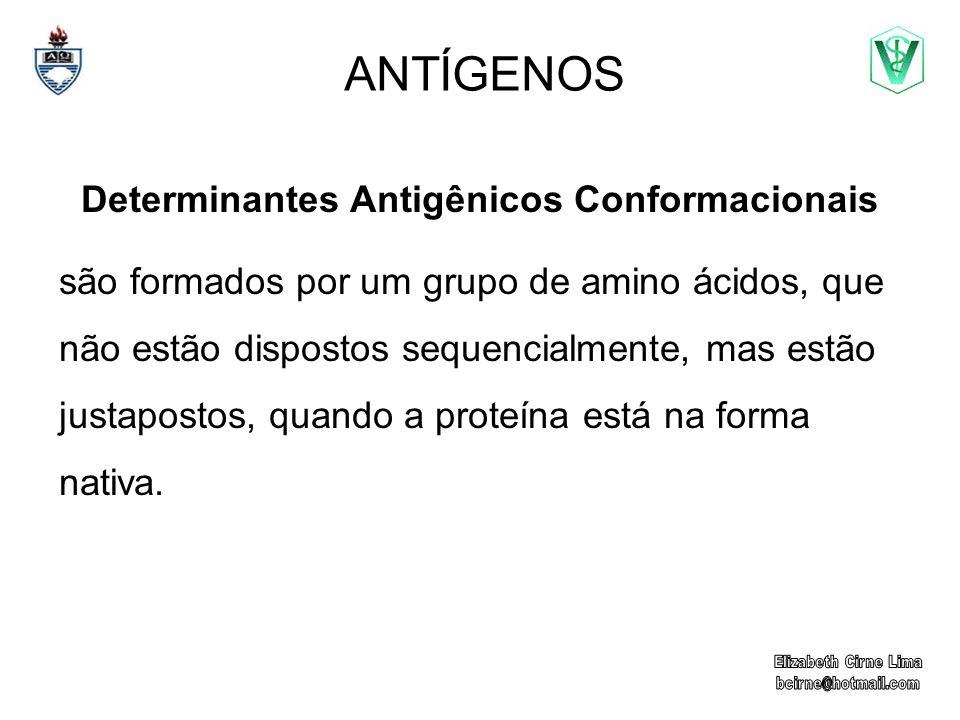 ANTÍGENOS Determinantes Antigênicos Conformacionais são formados por um grupo de amino ácidos, que não estão dispostos sequencialmente, mas estão just