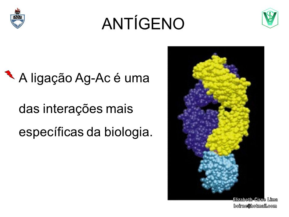 ANTÍGENO A ligação Ag-Ac é uma das interações mais específicas da biologia.