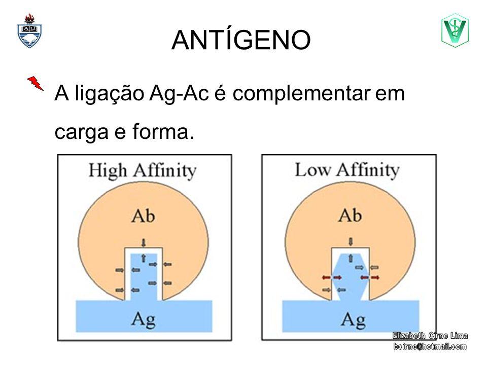 ANTÍGENO A ligação Ag-Ac é complementar em carga e forma.
