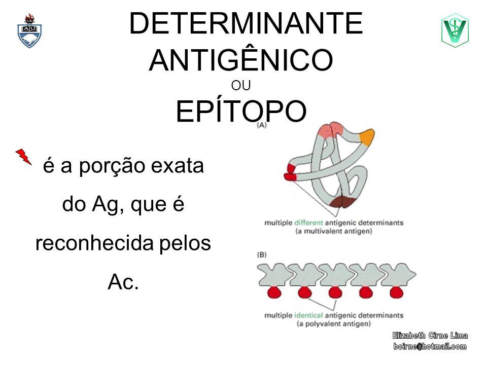 é a porção exata do Ag, que é reconhecida pelos Ac. DETERMINANTE ANTIGÊNICO OU EPÍTOPO