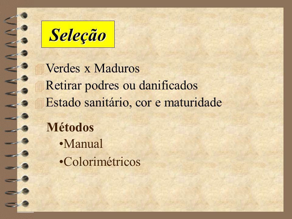 Lavador/Classificador Pelador de Frutas Lavador rotativo Lavador