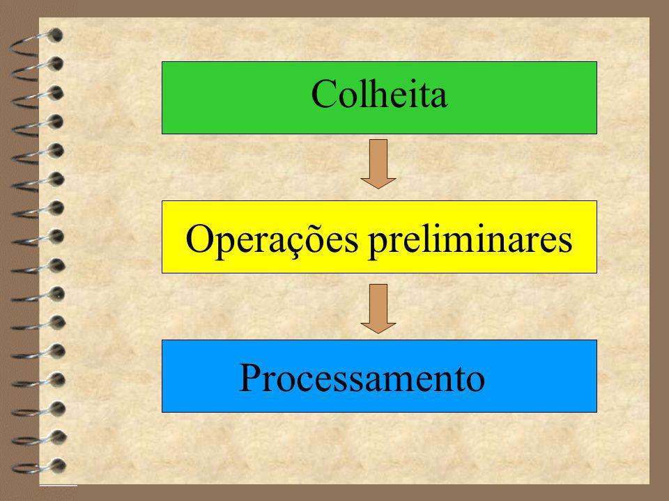 Processamento Colheita Limpeza Seleção Classificação Eliminação indesejáveis Branqueamento