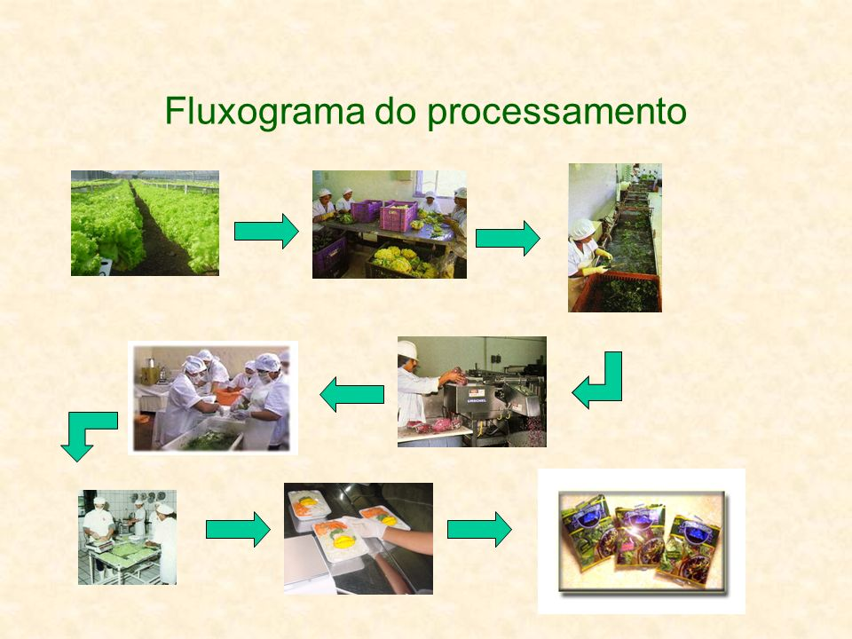 Fluxograma do processamento