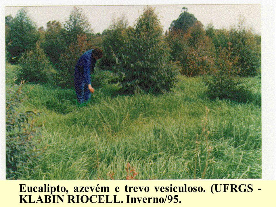 Eucalipto, azevém e trevo vesiculoso. (UFRGS - KLABIN RIOCELL. Inverno/95.