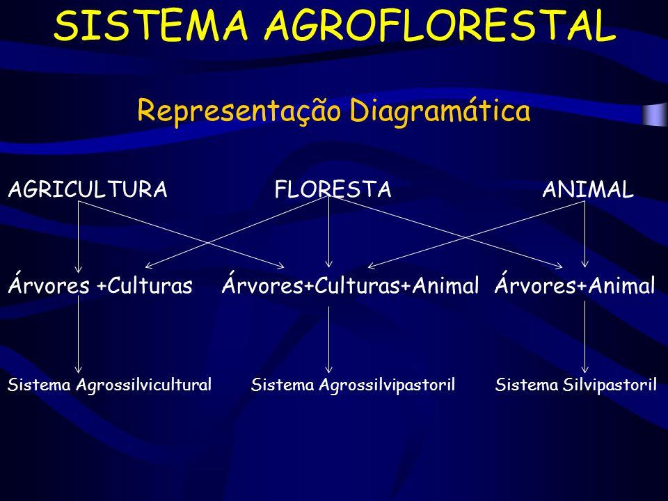 SISTEMA AGROFLORESTAL Representação Diagramática AGRICULTURAFLORESTAANIMAL Árvores +Culturas Árvores+Culturas+Animal Árvores+Animal Sistema Agrossilvi