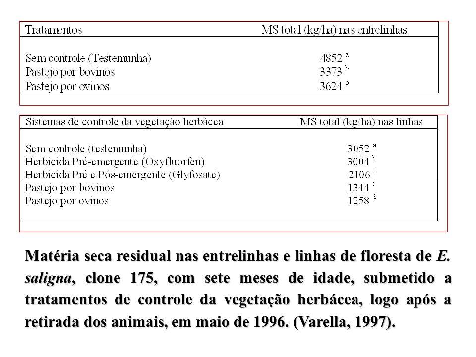 Matéria seca residual nas entrelinhas e linhas de floresta de E. saligna, clone 175, com sete meses de idade, submetido a tratamentos de controle da v