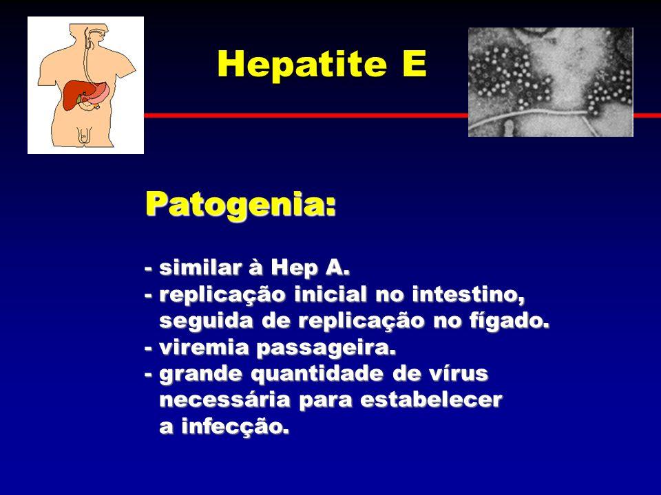 Hepatite E Patogenia: - similar à Hep A. - replicação inicial no intestino, seguida de replicação no fígado. seguida de replicação no fígado. - viremi