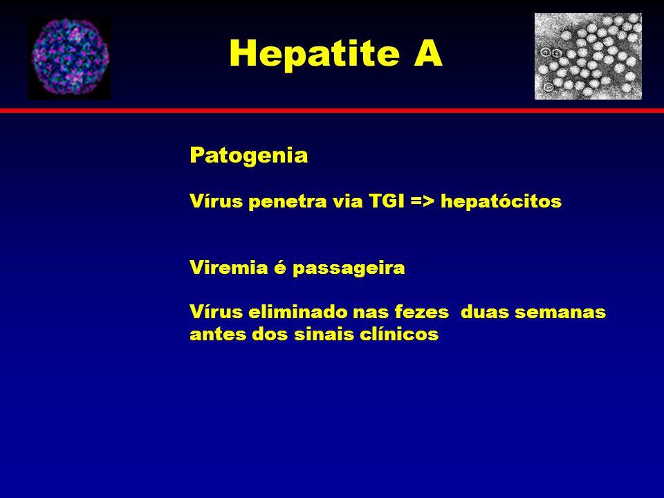 Patogenia Vírus penetra via TGI => hepatócitos Viremia é passageira Vírus eliminado nas fezes duas semanas antes dos sinais clínicos Hepatite A
