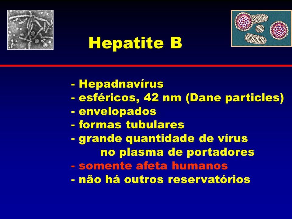 Hepatite B - Hepadnavírus - esféricos, 42 nm (Dane particles) - envelopados - formas tubulares - grande quantidade de vírus no plasma de portadores -