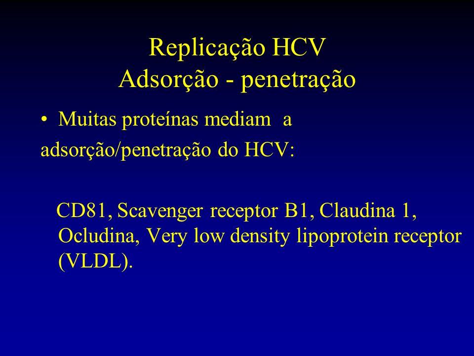 Replicação HCV Adsorção - penetração Muitas proteínas mediam a adsorção/penetração do HCV: CD81, Scavenger receptor B1, Claudina 1, Ocludina, Very low