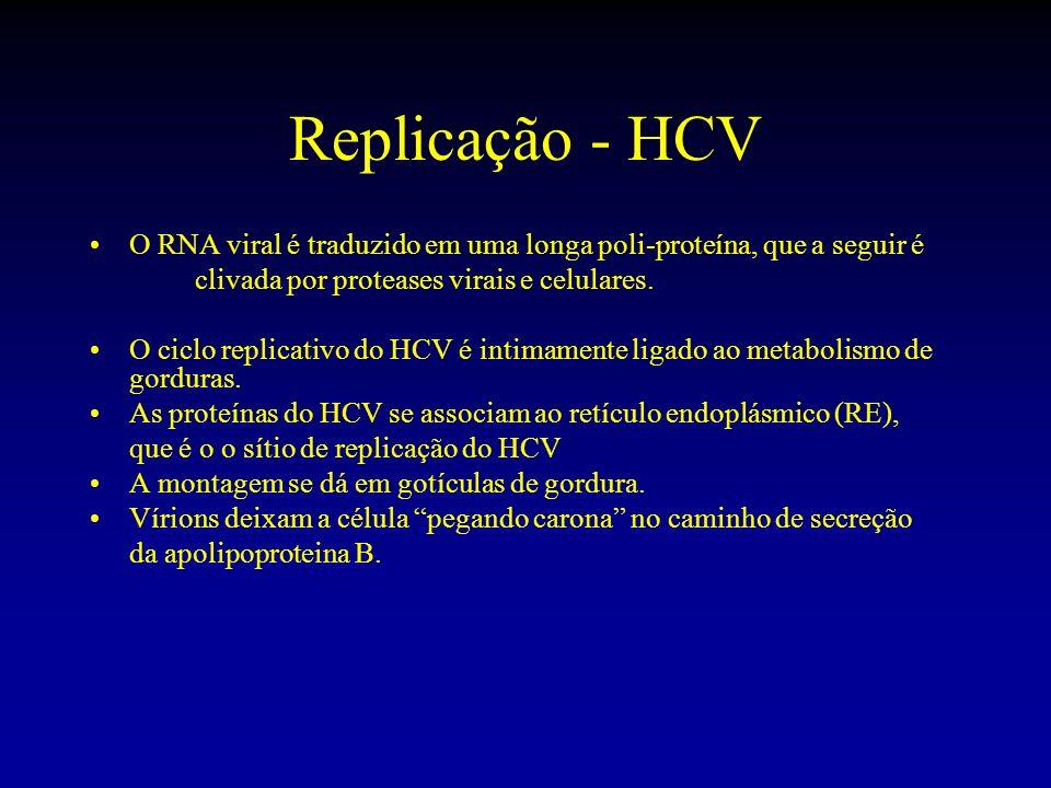 Replicação - HCV O RNA viral é traduzido em uma longa poli-proteína, que a seguir é clivada por proteases virais e celulares. O ciclo replicativo do H