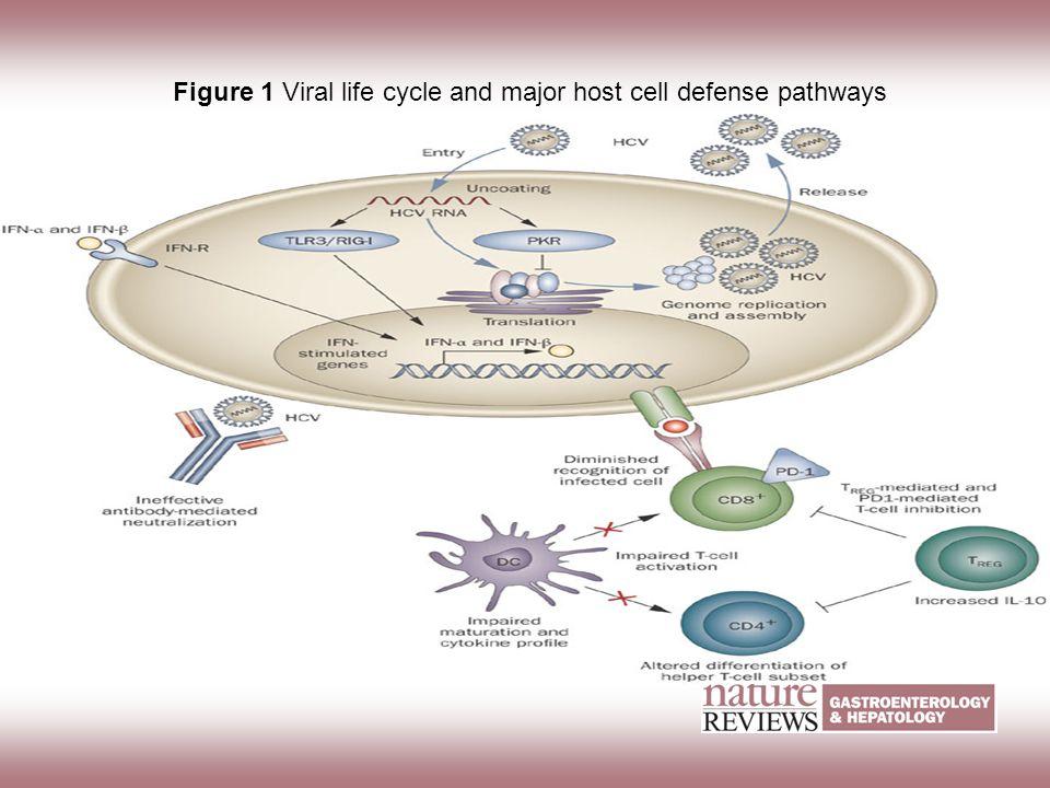 Figure 1 Viral life cycle and major host cell defense pathways Sklan E H et al. (2009) Mechanisms of HCV survival in the host Nat Rev Gastroenterol He