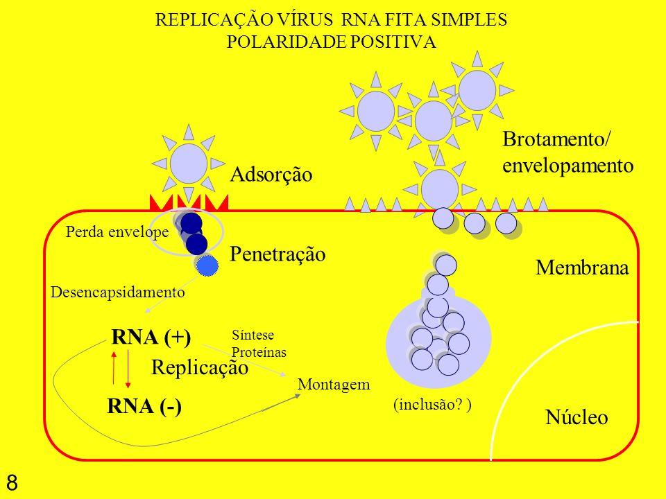8 REPLICAÇÃO VÍRUS RNA FITA SIMPLES POLARIDADE POSITIVA Núcleo Membrana Adsorção Penetração RNA (+) RNA (-) Replicação Brotamento/ envelopamento Monta