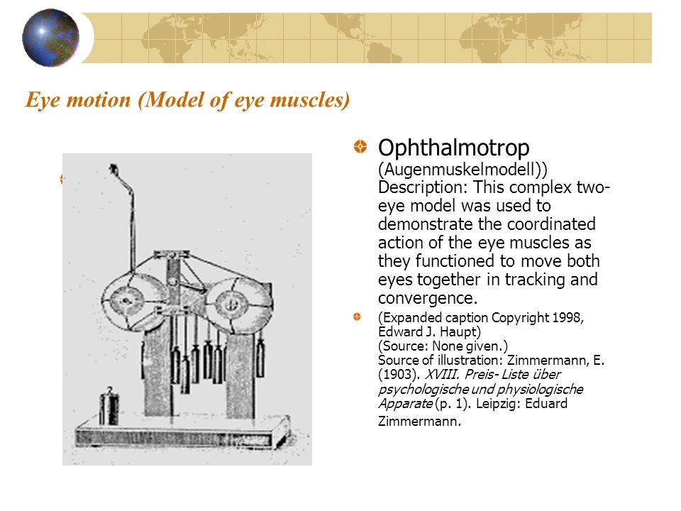 Eye motion (Model of eye muscles) Ophthalmotrop (Augenmuskelmodell)) Description: This complex two- eye model was used to demonstrate the coordinated