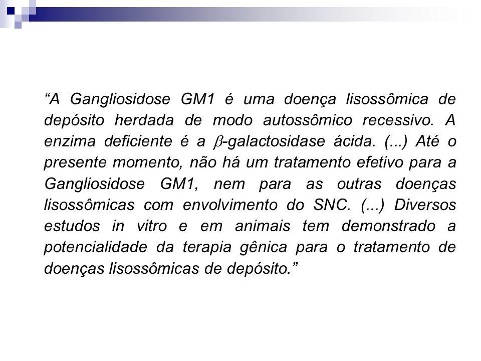 A Gangliosidose GM1 é uma doença lisossômica de depósito herdada de modo autossômico recessivo. A enzima deficiente é a -galactosidase ácida. (...) At