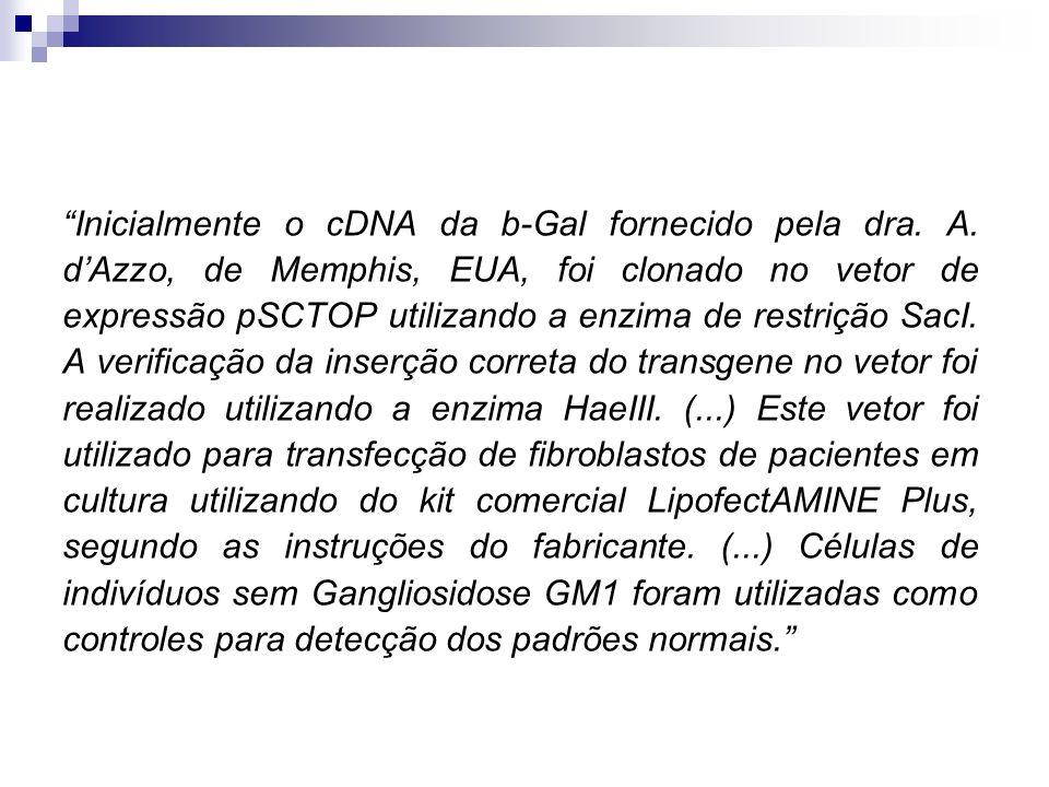Inicialmente o cDNA da b-Gal fornecido pela dra. A. dAzzo, de Memphis, EUA, foi clonado no vetor de expressão pSCTOP utilizando a enzima de restrição