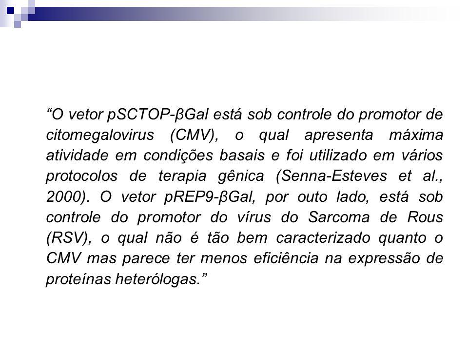 O vetor pSCTOP-βGal está sob controle do promotor de citomegalovirus (CMV), o qual apresenta máxima atividade em condições basais e foi utilizado em v