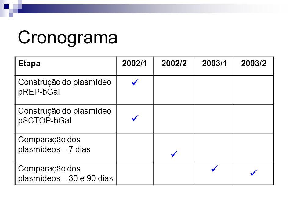 Cronograma Etapa2002/12002/22003/12003/2 Construção do plasmídeo pREP-bGal Construção do plasmídeo pSCTOP-bGal Comparação dos plasmídeos – 7 dias Comp