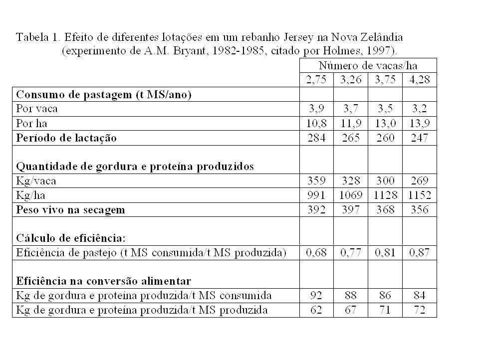 Planejamento a Longo Prazo Taxa de Lotação
