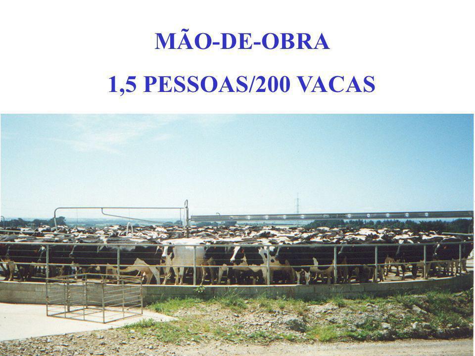 MÃO-DE-OBRA ESPECIALIZADA E ENTUSIASMADA