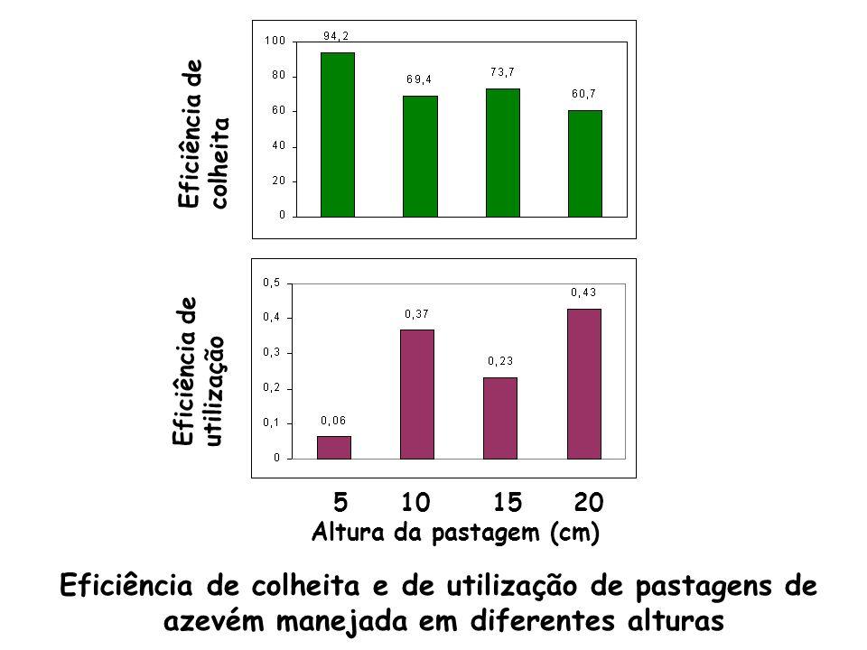 Altura da pastagem (cm) 5 10 15 20 Eficiência de colheita Eficiência de utilização Eficiência de colheita e de utilização de pastagens de azevém manej