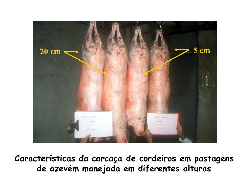 20 cm 5 cm Características da carcaça de cordeiros em pastagens de azevém manejada em diferentes alturas