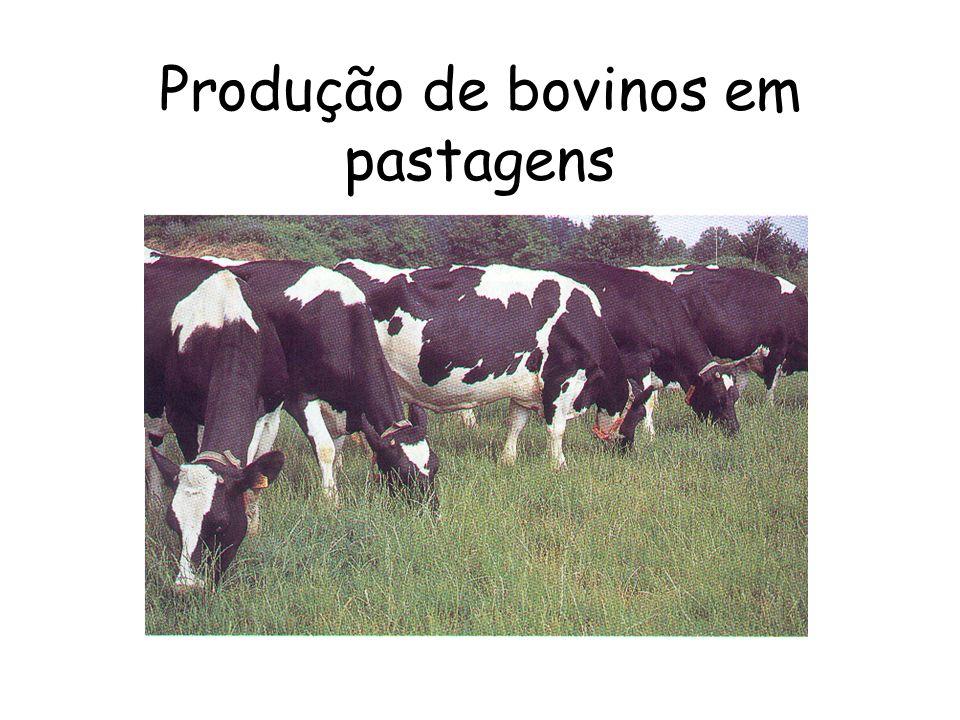Produção de bovinos em pastagens