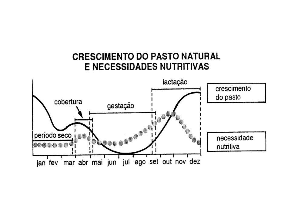Oferta de lâminas verdes (kg de MO/dia) Consumo (kg de MO/dia) Efeito da oferta de lâminas verdes no consumo de vacas de leite de alta produção (Peyraud et al., 1999)