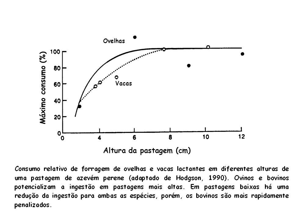 Ovelhas Vacas Altura da pastagem (cm) Máximo consumo (%)