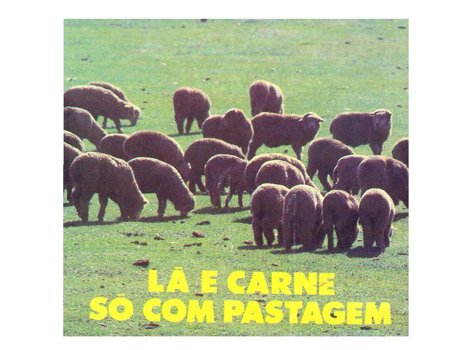 Altura da pastagem (cm) Massa do bocado (g) Taxa de bocados (n o /min) Hodgson (1990) Tempo de pastejo (h) Consumo (kg MS/dia)