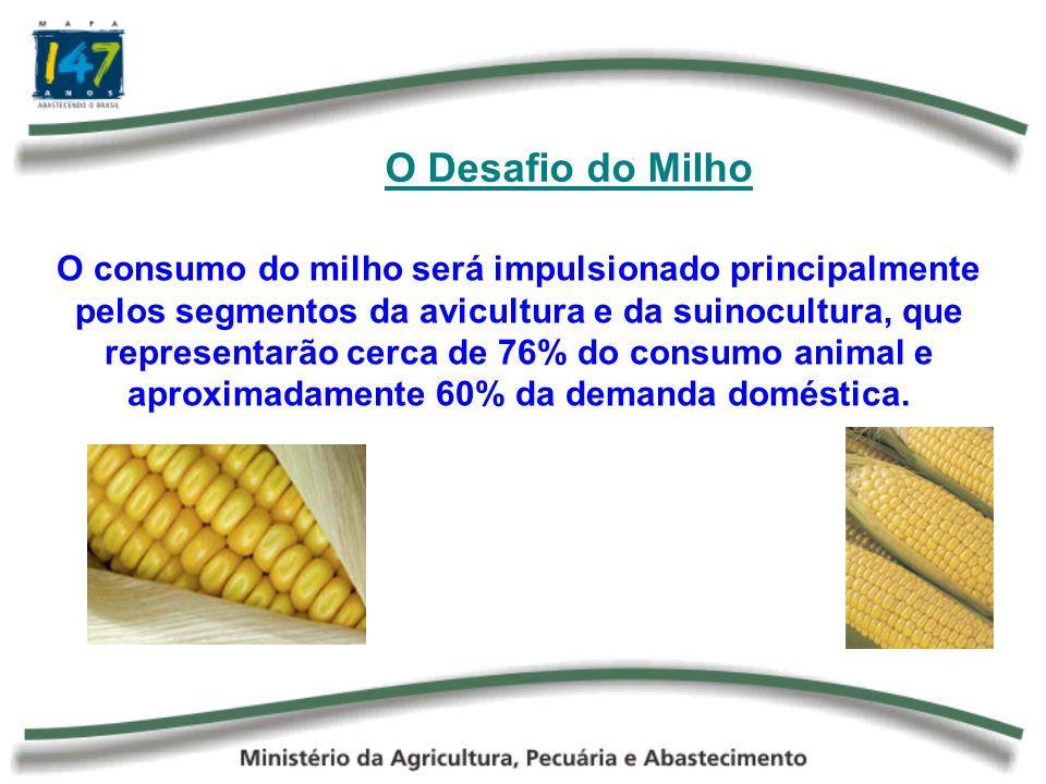 O Desafio do Milho O consumo do milho será impulsionado principalmente pelos segmentos da avicultura e da suinocultura, que representarão cerca de 76%