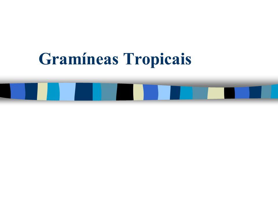 Qual o histórico do uso das gramíneas tropicais no Brasil?