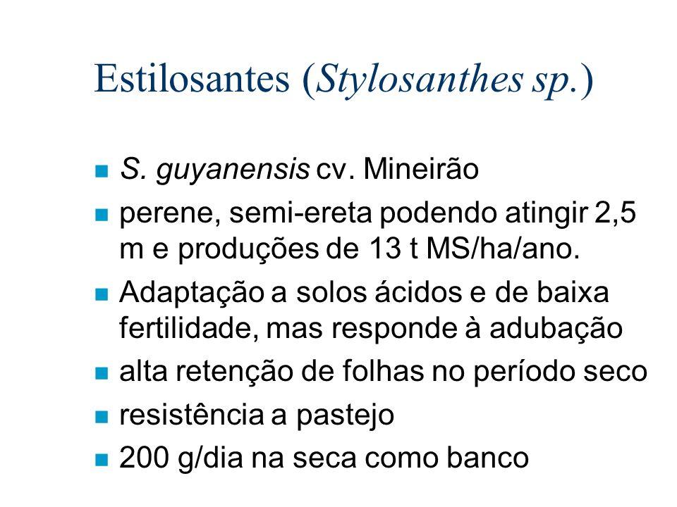 n S. guyanensis cv. Mineirão n perene, semi-ereta podendo atingir 2,5 m e produções de 13 t MS/ha/ano. n Adaptação a solos ácidos e de baixa fertilida