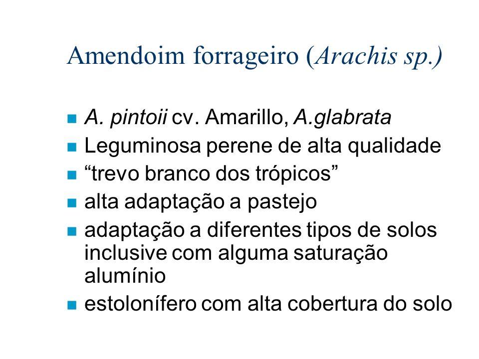 n A. pintoii cv. Amarillo, A.glabrata n Leguminosa perene de alta qualidade n trevo branco dos trópicos n alta adaptação a pastejo n adaptação a difer