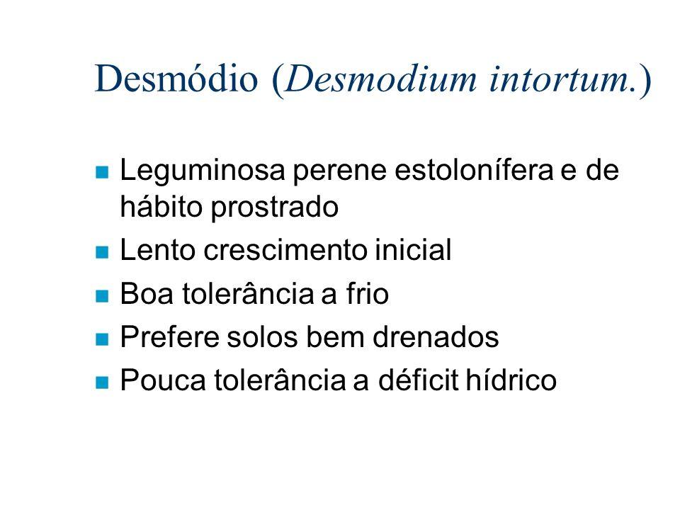 Desmódio (Desmodium intortum.) n Leguminosa perene estolonífera e de hábito prostrado n Lento crescimento inicial n Boa tolerância a frio n Prefere so