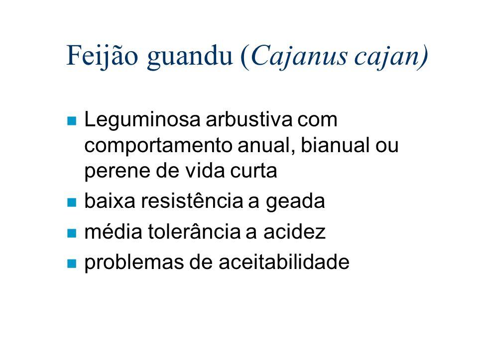 Feijão guandu (Cajanus cajan) n Leguminosa arbustiva com comportamento anual, bianual ou perene de vida curta n baixa resistência a geada n média tole
