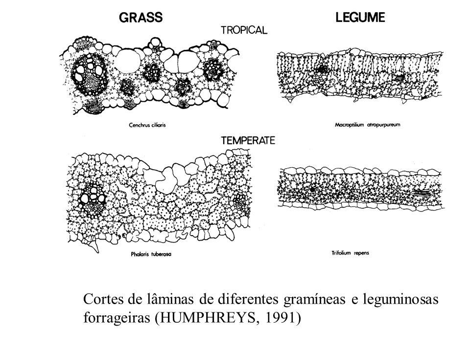 Cortes de lâminas de diferentes gramíneas e leguminosas forrageiras (HUMPHREYS, 1991)